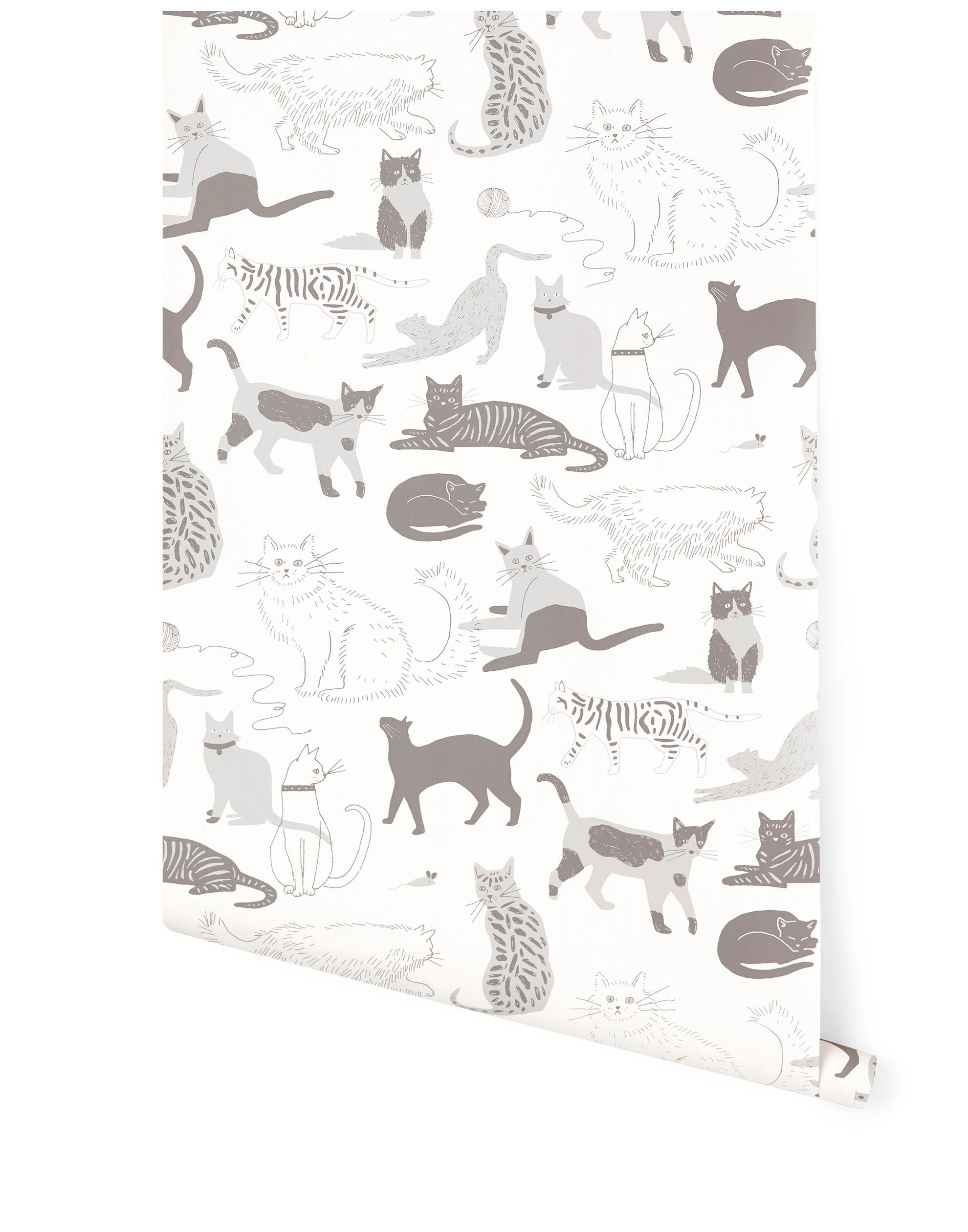 Cat S Meow Gray Roll Cat Wallpaper Grey Wallpaper Wallpaper