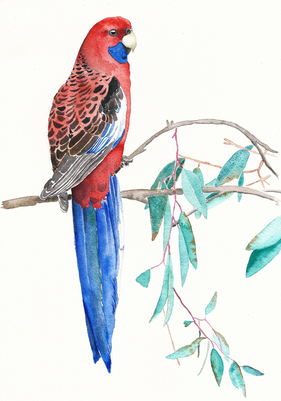 Parrot Ilration Tropical Bird Print Wall Art Yoga Room Artwork Decor
