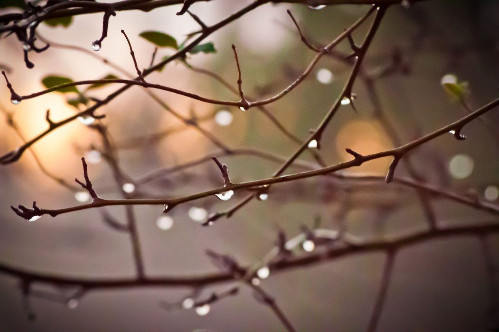 https://flic.kr/p/CCvyjt | Sunrise and water drops