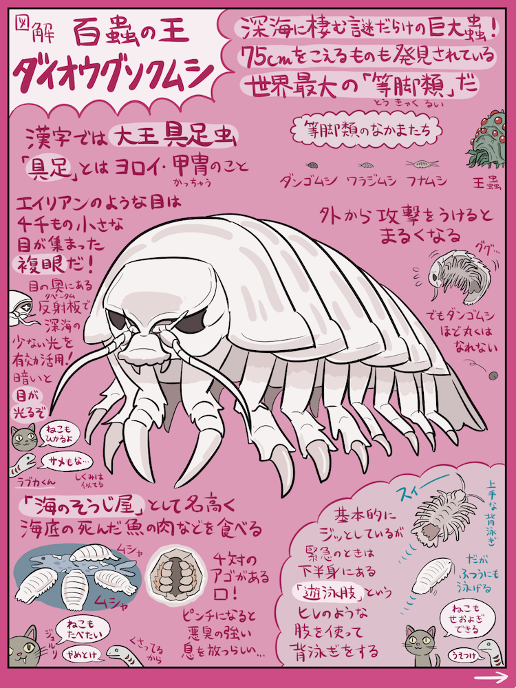 深海のふしぎメガ蟲 ダイオウグソクムシ の図解です 2月14日は深海生物ファンにとっては特別な日ですよね 世間だとなんか別のイベントをやってるみたいですがそんなものは放っておいて 今宵は一緒にこの幻想的で物静かな巨大生物に想いを馳せるとしましょう