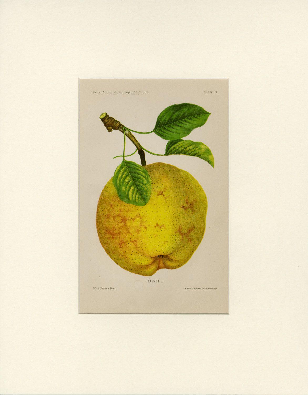 APPLE Vintage Art Print \