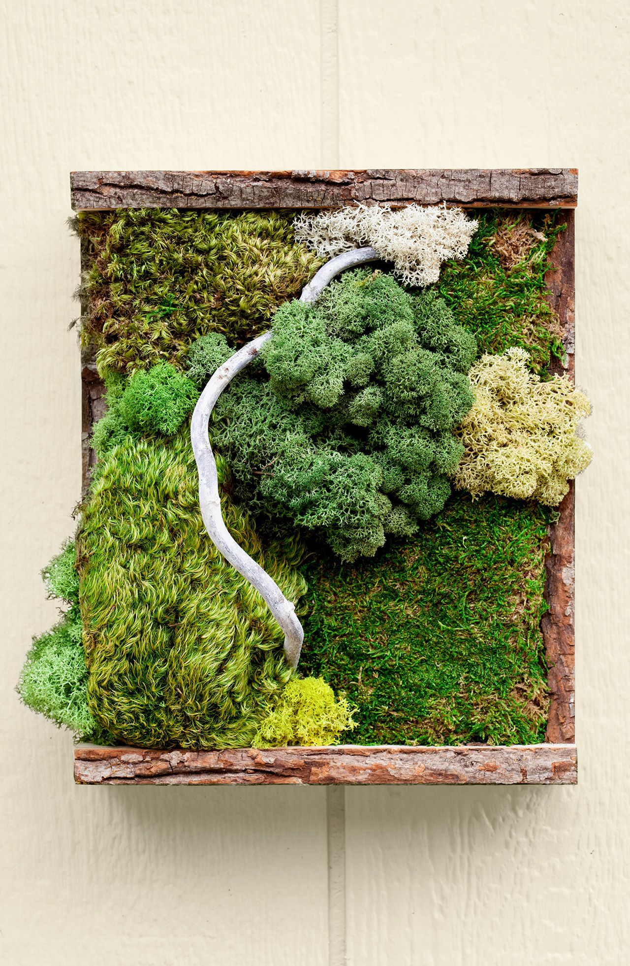 This Diy Moss Wall Art Will Liven Up Your Interiors All Year Long Moss Wall Art Moss Wall Garden Wall Art