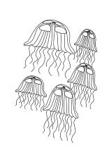 Schwarm Von Quallen Ausmalbilder Fische Quallen Unterwasserwelt