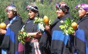 Farmacia mapuche aloe vera