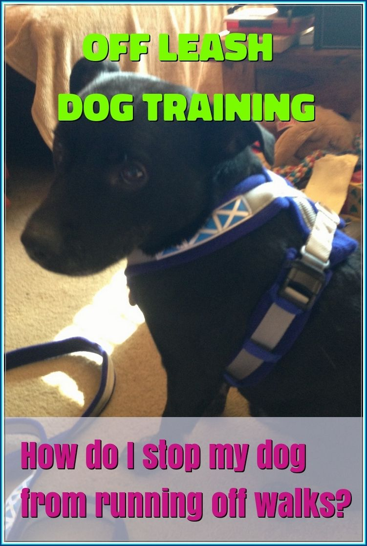 How to teach your dog to behave off leash dog training