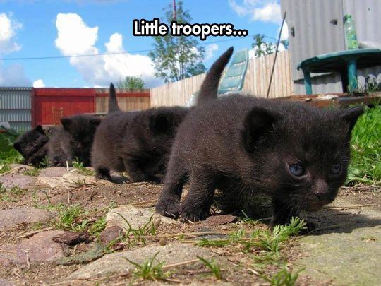 The March Of The Kitties  // funny pictures - funny photos - funny images - funny pics - funny quotes - #lol #humor #funnypictures