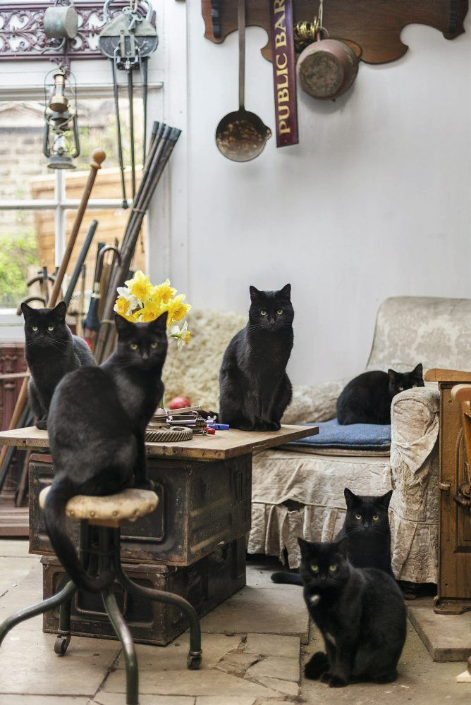 101 things to do in London Cute black cats, Cats, Crazy cats