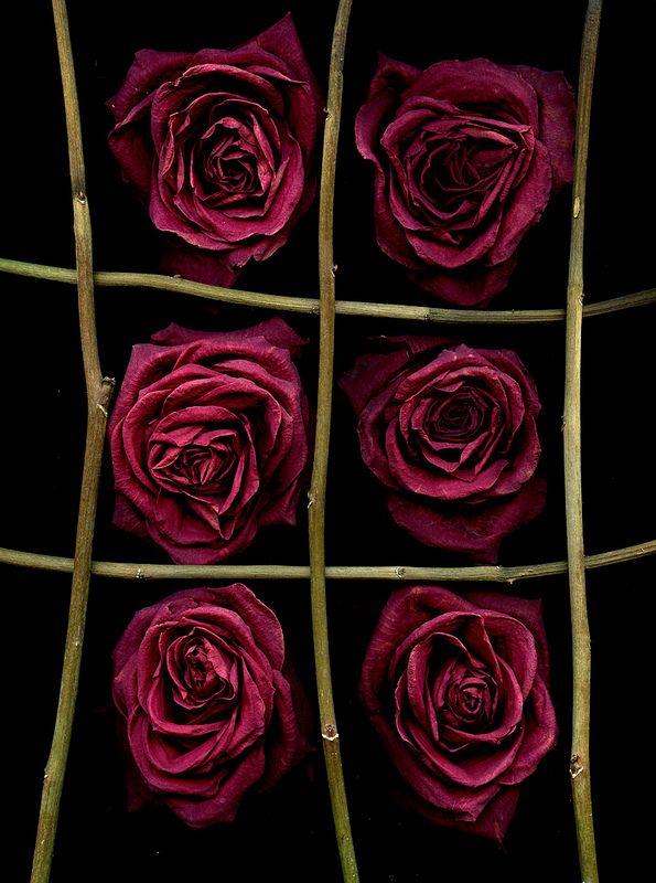 55739.01 Rosa