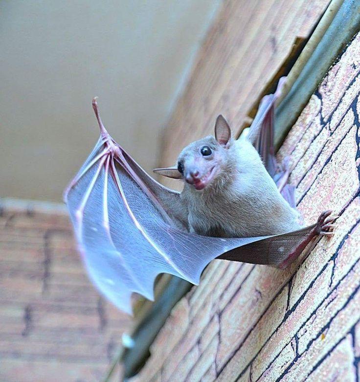 судья милые картинки с летучими мышами вот