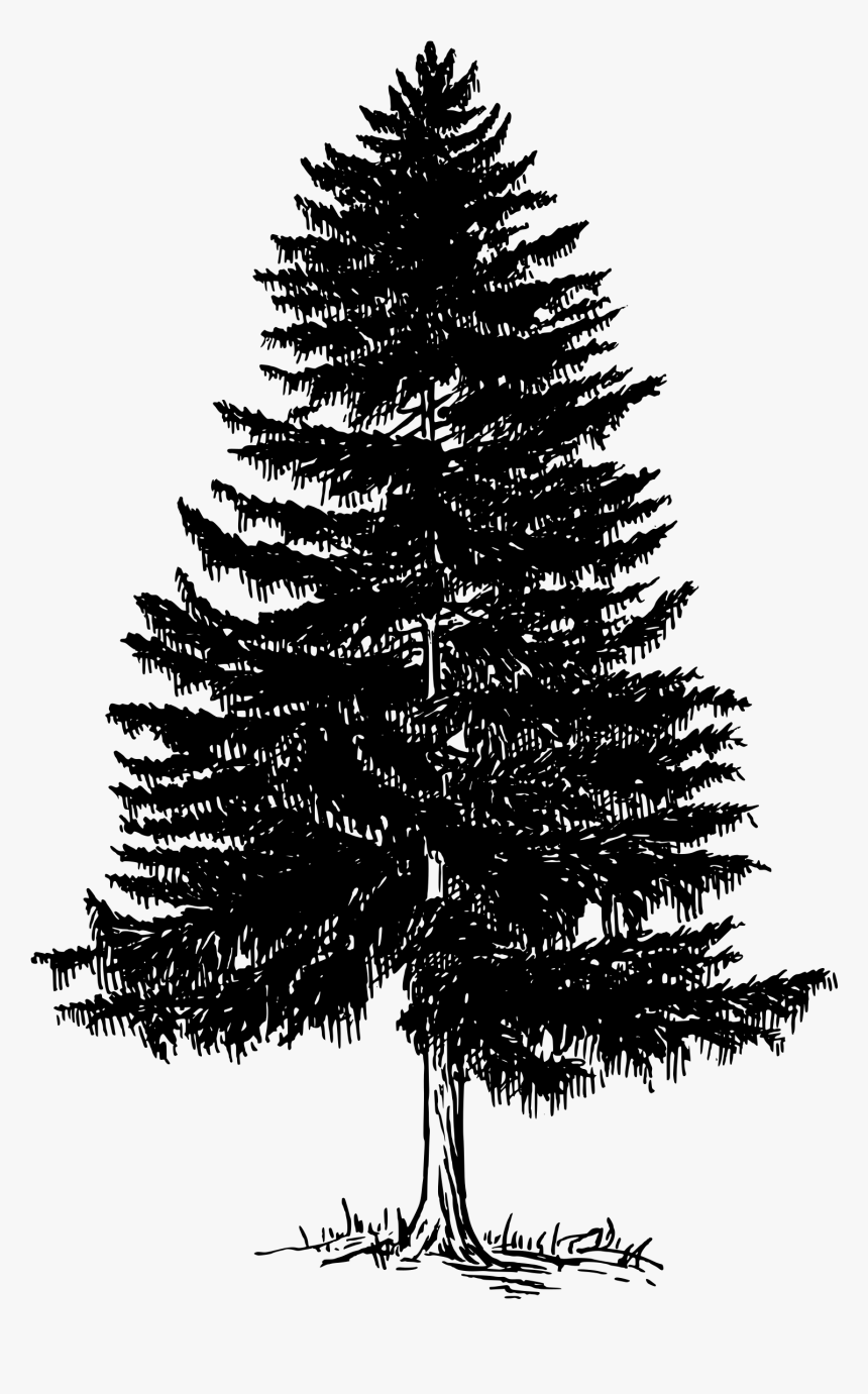 Pine Tree Clipart Tree Shadow Free Collection Christmas Tree Shadow Png Transparent Png 1000x1000 Free Pine Tree Silhouette Tree Clipart Tree Silhouette
