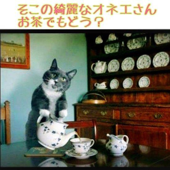 こんなナンパなら受ける 受ける方 フォローありがとうございます W ねこ 猫 動物 ペット 東京 面白い 可愛い かわいい ダイエット 腹筋 渋谷 新宿 お金 ネットビジネス 副業 お小遣い カフェ ダイエッター 肉 子猫 おもしろネコ
