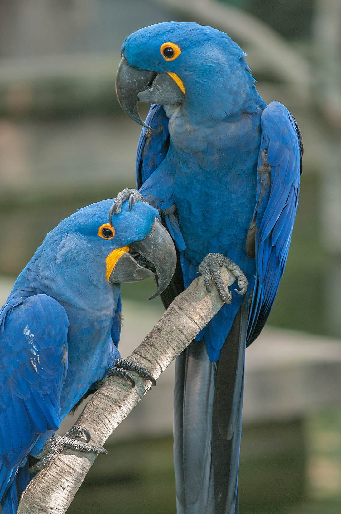 let me take you toooo rio rio | birdies | pinterest | bird