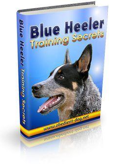 Blue Heeler Training Secrets How To Train A Blue Heeler Dog