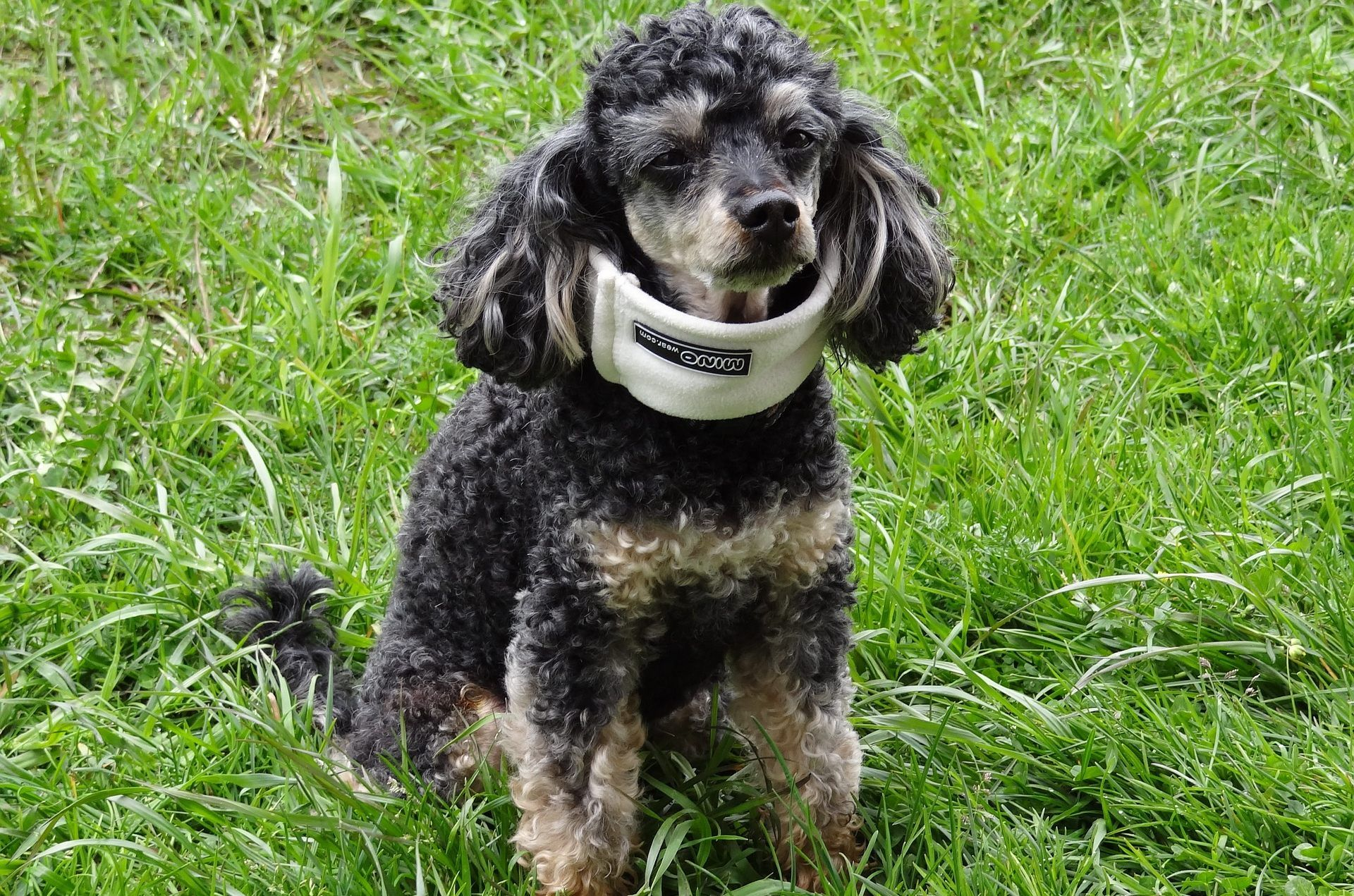 Tips for helping your dog recover from injury, illness or