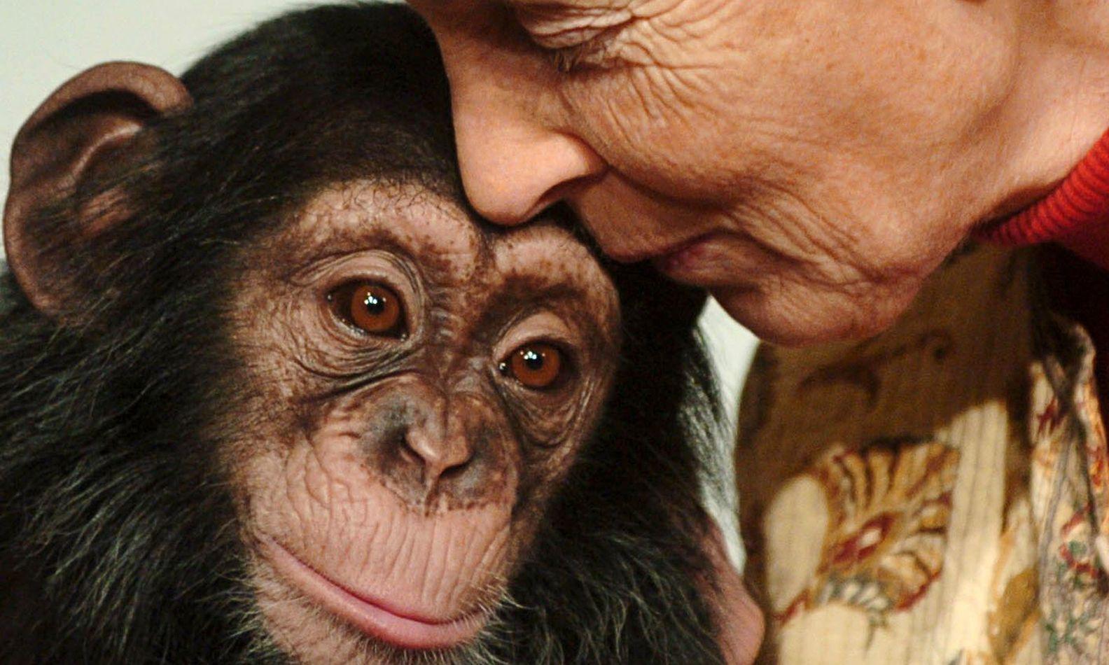 первом человек с обезьянкой картинки остальных тем