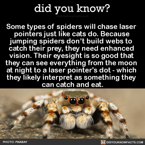 pin by heidi alfonzo on charlotte pinterest pointers spider and