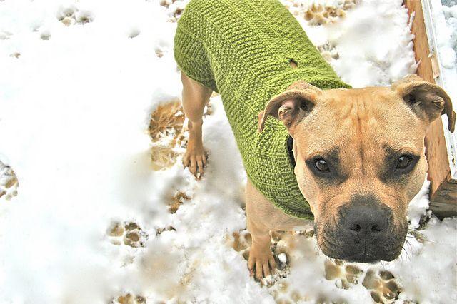 Nala Needs A Coat Large Dog Sweater Pattern By Jessica Morsell