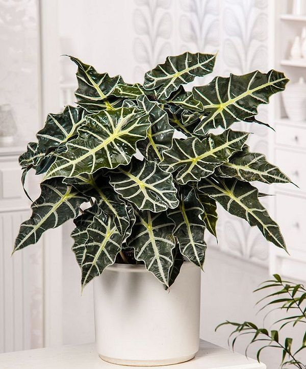 34 Poisonous Houseplants For Dogs And Cats Tanaman Tanaman Pot