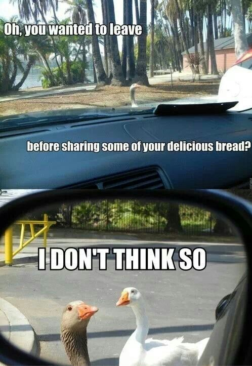 duck funny meme - http://whyareyoustupid.com/duck-funny ...