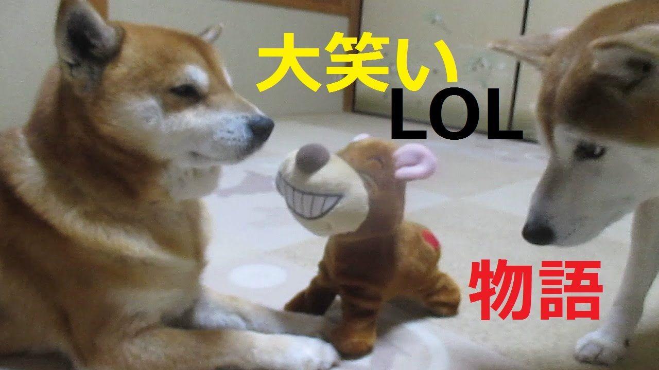 抱腹絶倒!爆笑犬ハッピーと柴犬まめ・ちゃめの大笑い物語