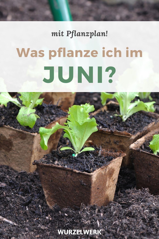 Aussaat & Pflanzen im Juni + Beispiel-Pflanzplan - Wurzelwerk