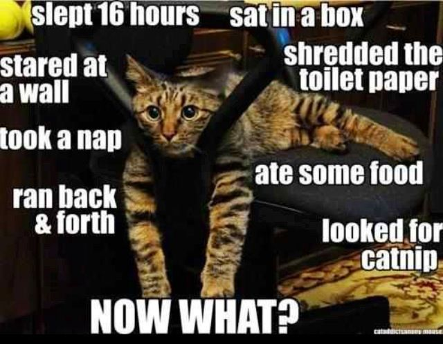 Totally my cat :)