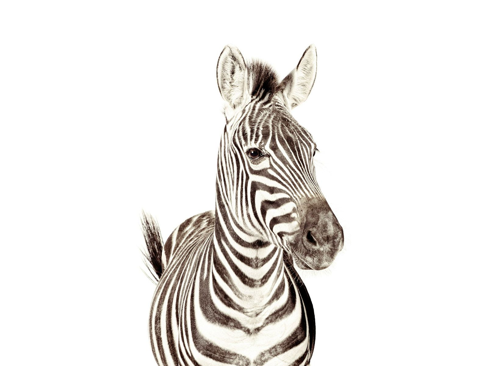 Behang Kinderkamer Zebra : Magneet behang dierenprint zebra groovy magnets 1 kinderkamers