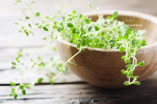 Fresh green thyme on the wooden table by OxanaDenezhkina  IFTTT 500px