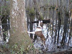 Train A Squirrel Dog Dog Training Dog Training Tips Training