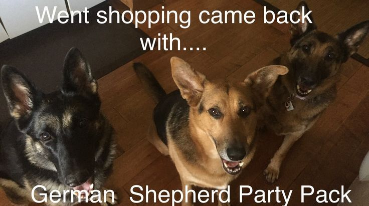 Perfect Recall With My Pack Of German Shepherds Happy Dogs