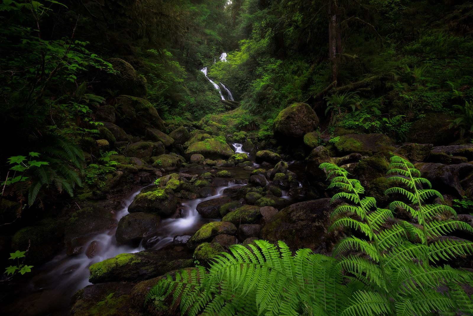 https://flic.kr/p/GoLvx8 | Bunch Creek | This waterfall shot was taken last spring in the Quinault Rainforest in Washington. The 2015 drought left the flow here quite low, hopefully it's bounced back somewhat in 2016.  Comments are appreciated!