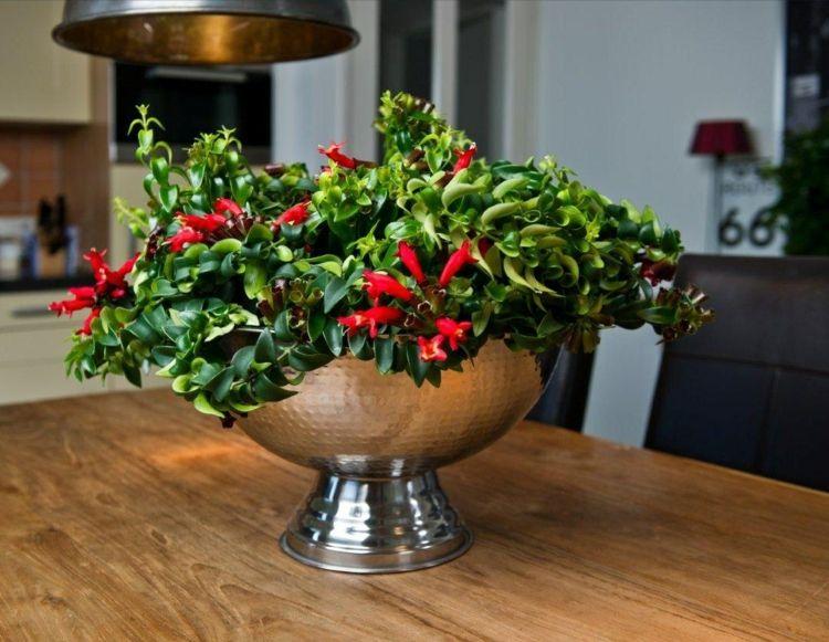 Zimmerpflanze Wenig Licht zimmerpflanzen wenig licht schamblume rot blueten tisch dekoration