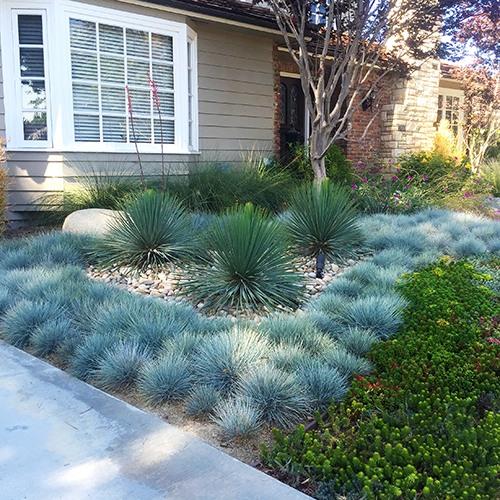 Elijah Blue Fescue Blue Fescue Landscape Design Backyard Garden Design