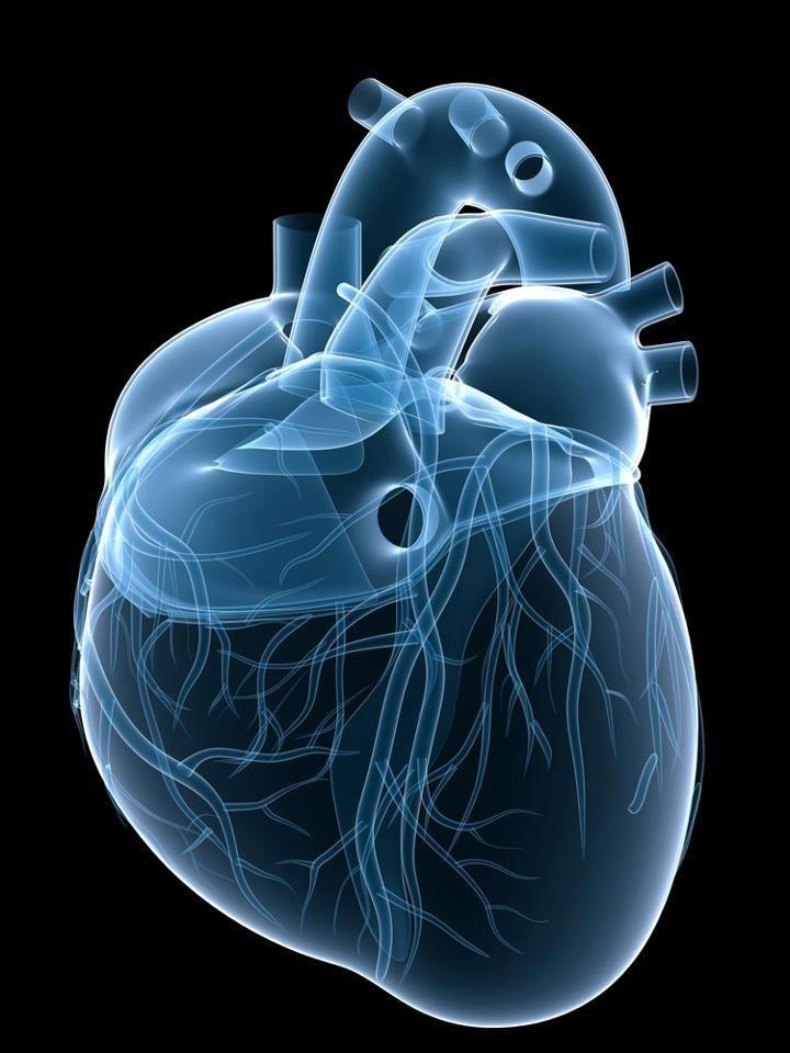Preciosa reconstrucción 3D del corazón | Imágenes de medicina y ...