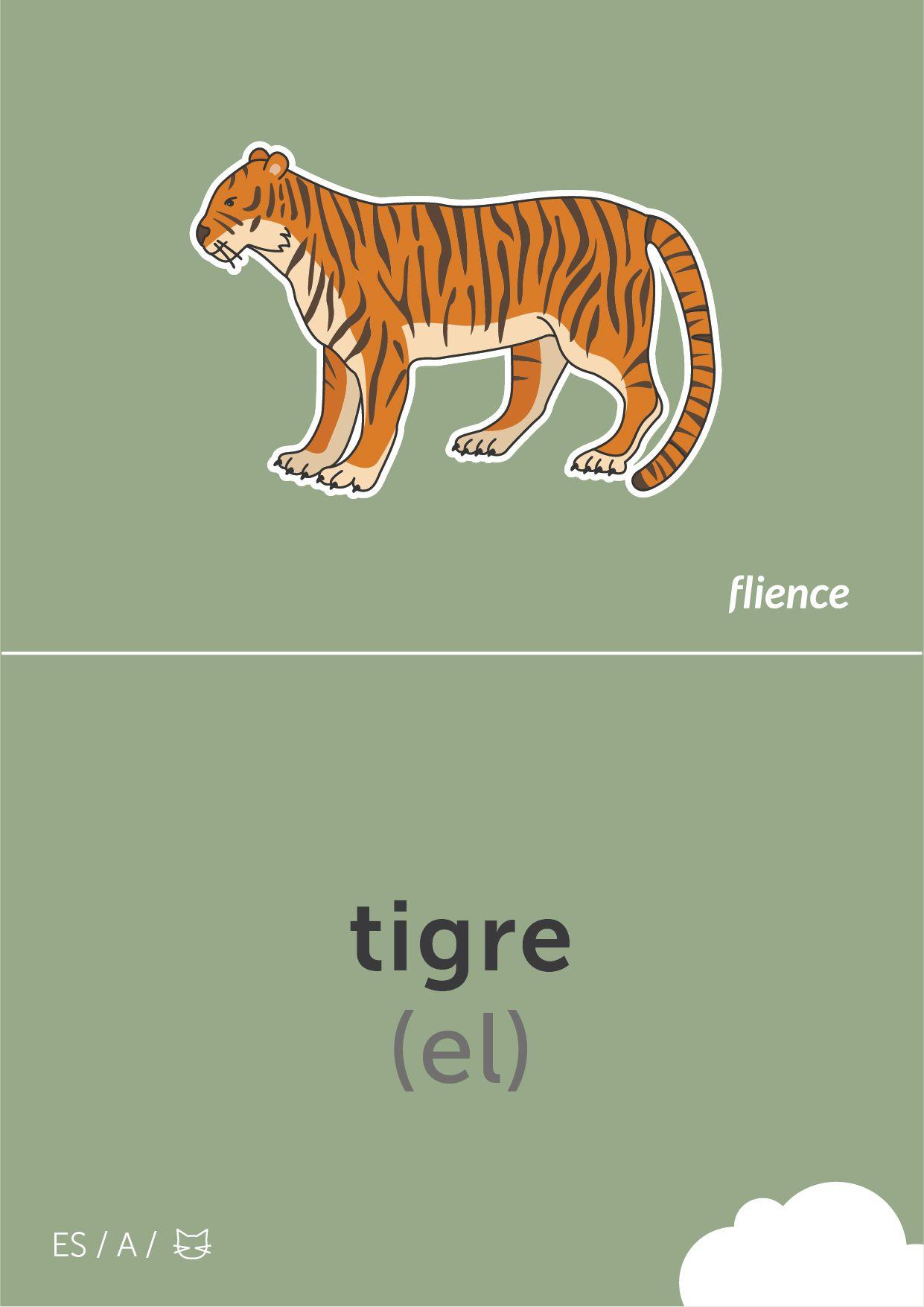 Tigre Cardfly Flience Animals Spanish Education Flashcard Language Tygrys Wloski Design