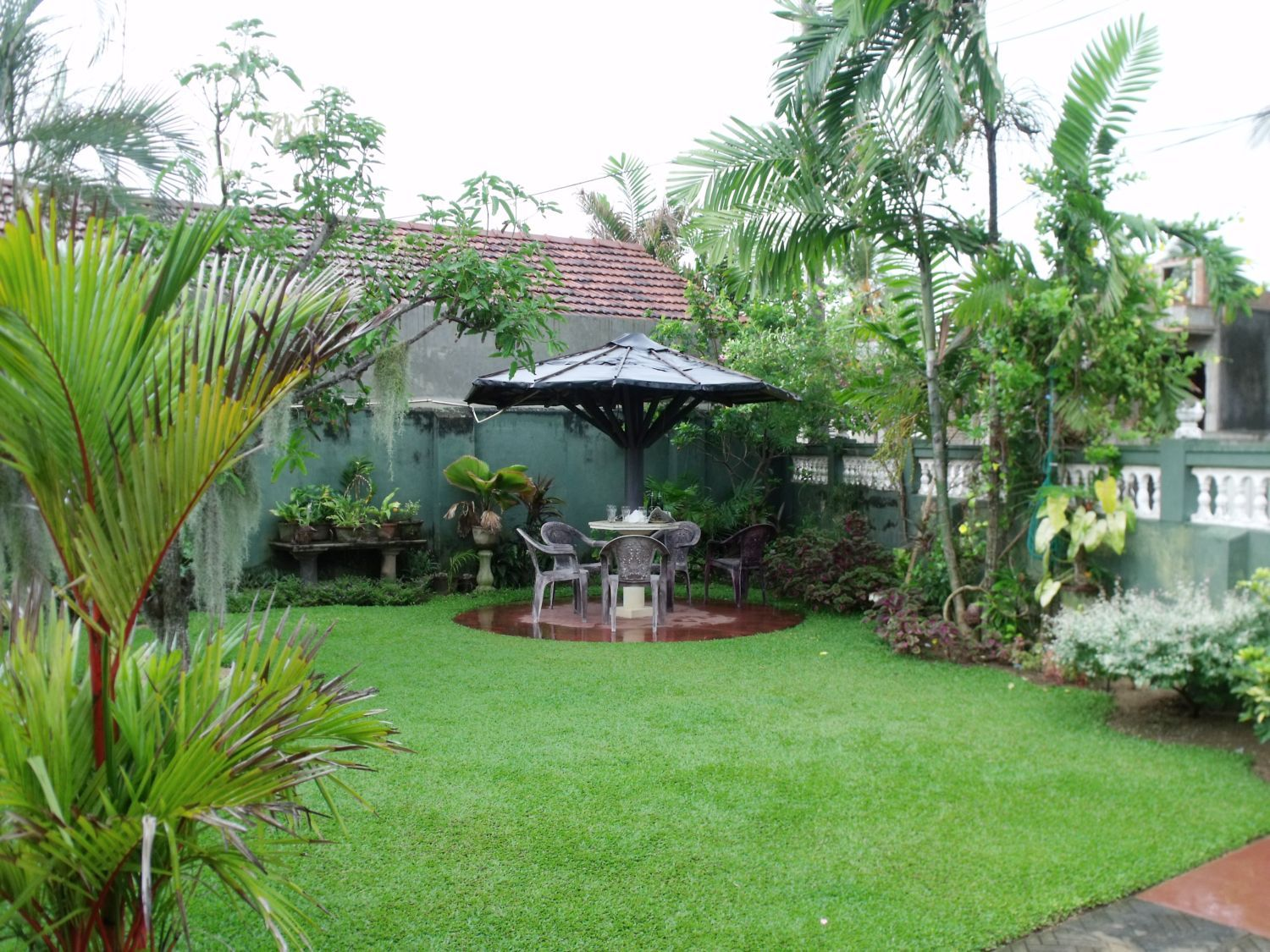 A Home Garden In Duwa Negombo Sri Lanka Trees Plants