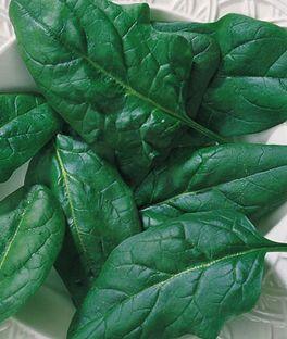 Spinach, Salad Fresh,