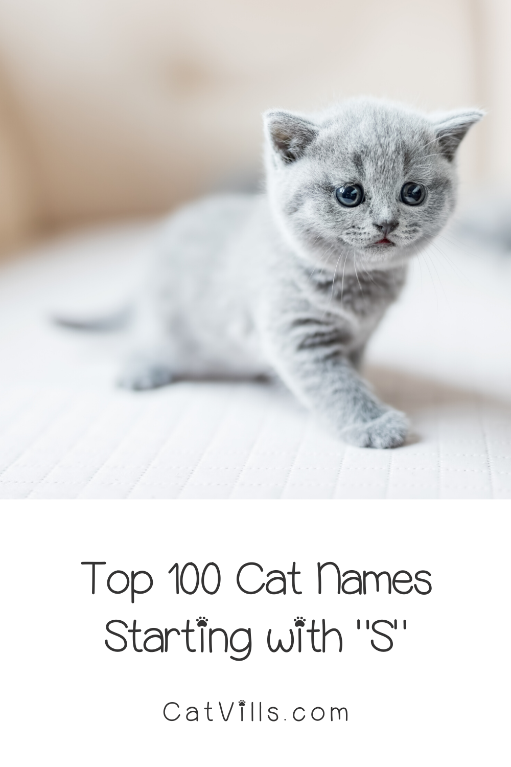 100 Sweet Cat Names Starting With S Catvills In 2020 Cat Names Grey Cat Names Pet Names For Dogs