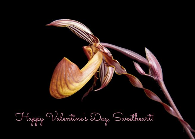 For Sweetheart On Valentine Rsquo S Day Orchid On Black Card Ad Affiliate Rsquo Valentine Sweetheart Day Sweetheart Black Card Christmas Cooking