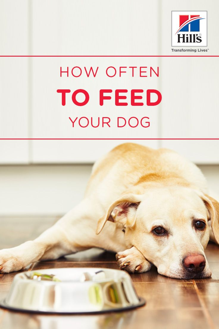 How much how often to feed your puppydog what can