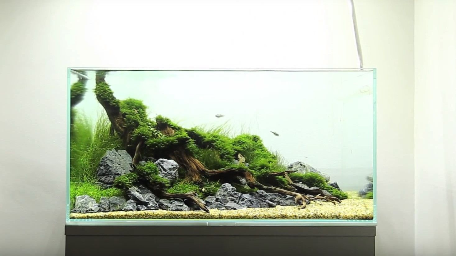 60cm Nature Planted Aquarium