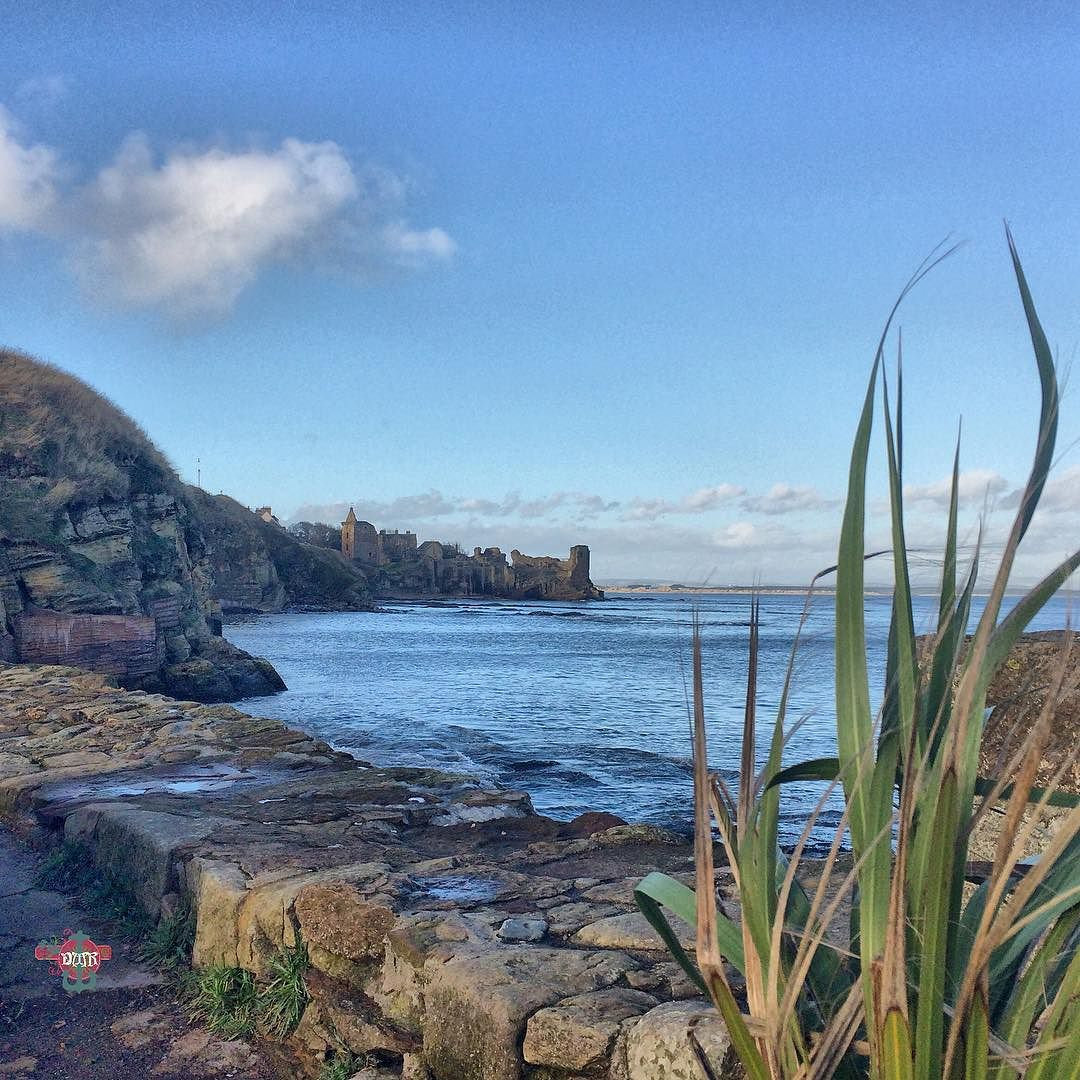 #standrewscastle #standrewsharbour #harbour #pier #grass #sea #castle #standrews Photos from my travels
