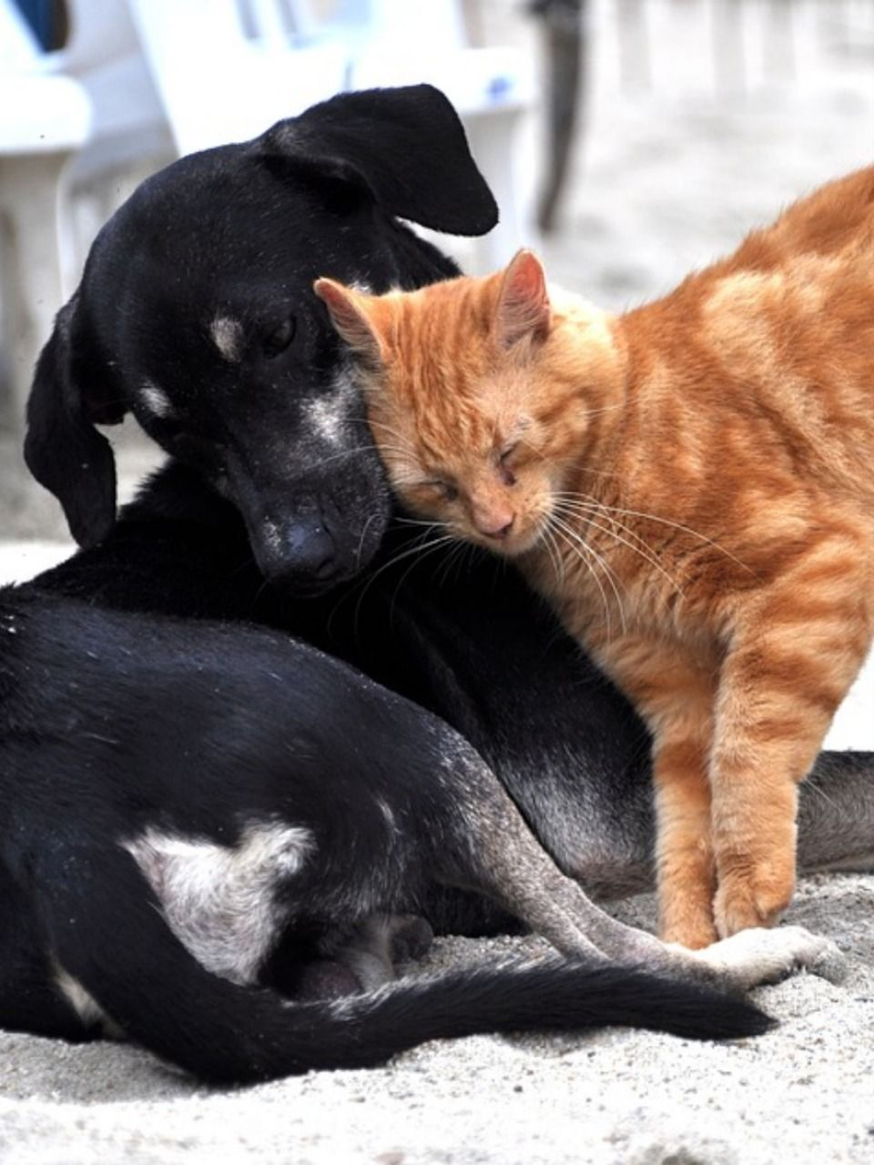 What Is Pet Insurance And How Choose The Best Pet Insurance Cute Animals Your Dog Dog Cat
