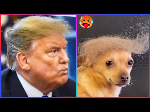 41 Tiktok Try Not To Laugh Challenge Impossible Part 4 Youtube Try Not To Laugh Laugh Challenges