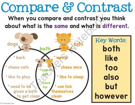 Comparing And Contrasting Cats And Dogs Ideas
