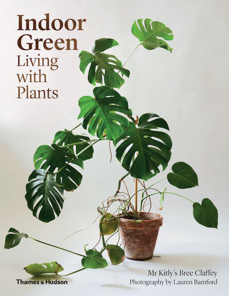 Creative house plants