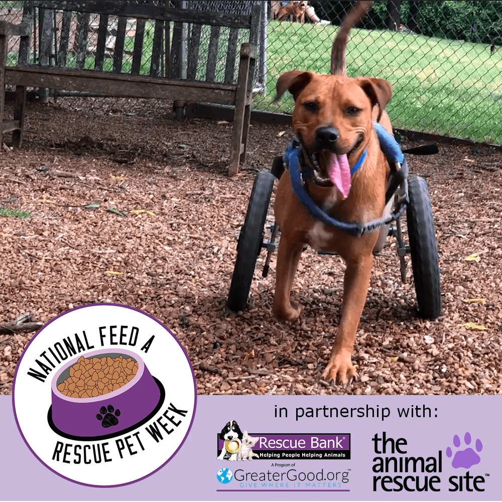 National Feed a Rescue Pet Week: Feed 4 Million Homeless Pets! #animalrescue