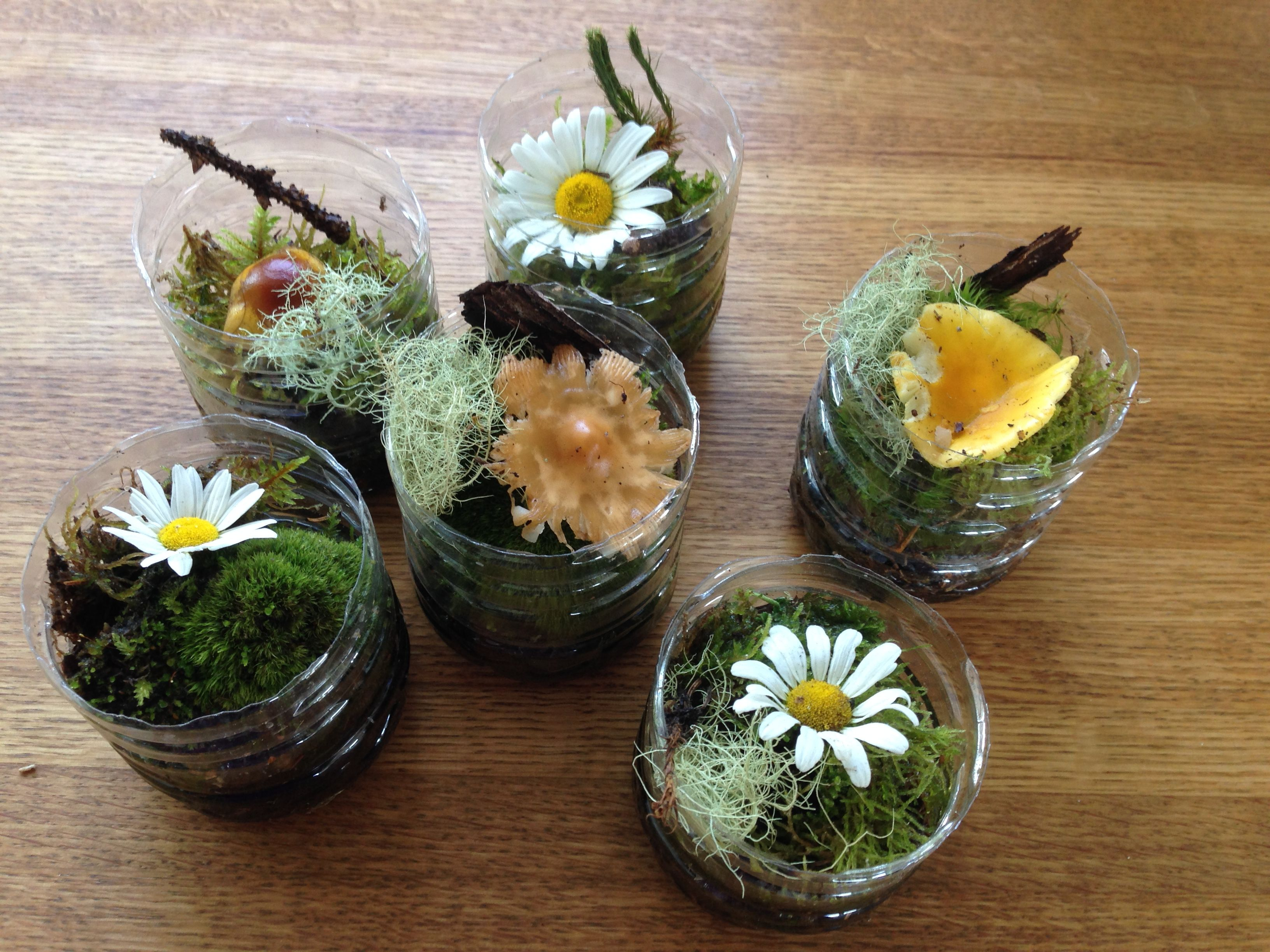 wedding decoration with pet moss flowers g nstige. Black Bedroom Furniture Sets. Home Design Ideas