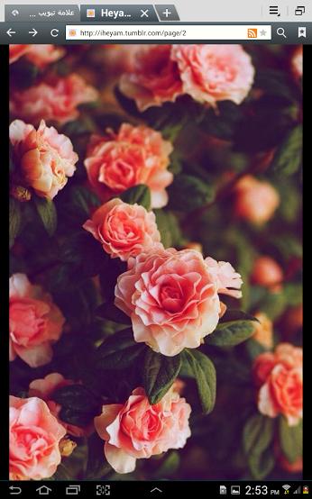 قمرايه الحكمي لؤلؤة الشرق Google Most Beautiful Flowers Flowers Beautiful Flowers