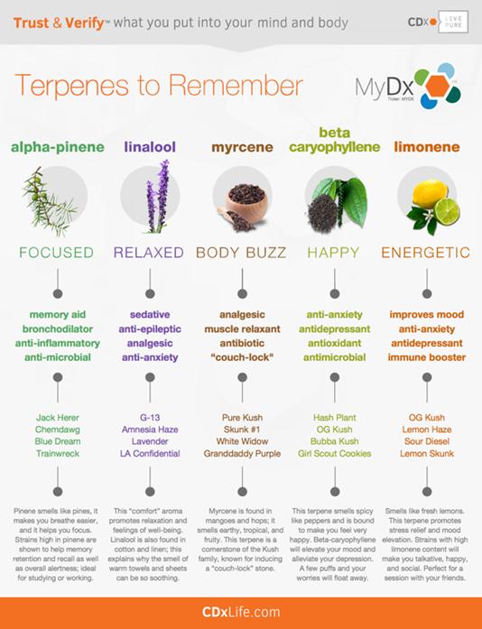 Terpene chart clinicalcannabiscare cure cancer also cannabis rh pinterest